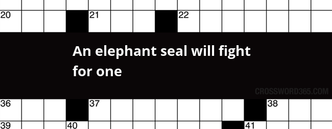 An Elephant Seal Will Fight For One Crossword Clue