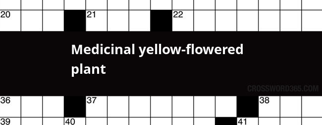 Medicinal yellow flowered plant crossword clue below you will be able to find the answer to medicinal yellow flowered plant crossword clue our site contains over 28 million crossword clues in which mightylinksfo