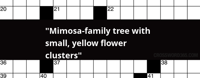 Mimosa Family Tree With Small Yellow Flower Clusters Crossword Clue