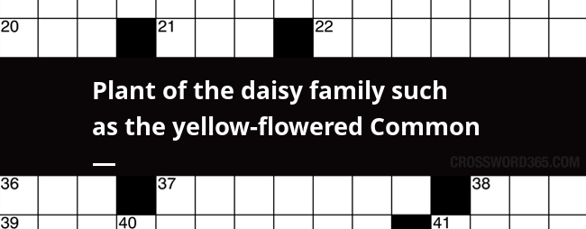 Plant Of The Daisy Family Such As The Yellow Flowered Common