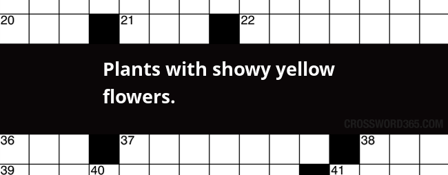 Plants with showy yellow flowers crossword clue below you will be able to find the answer to plants with showy yellow flowers crossword clue our site contains over 28 million crossword clues in mightylinksfo