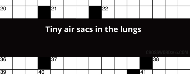 Tiny air sacs in the lungs crossword clue below you will be able to find the answer to tiny air sacs in the lungs crossword clue our site contains over 28 million crossword clues ccuart Choice Image