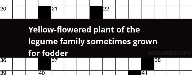 Yellow flowered plant of the legume family sometimes grown for below you will be able to find the answer to yellow flowered plant of the legume family sometimes grown for fodder crossword clue which was last mightylinksfo